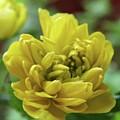 Yellow Shy by Kim Tran