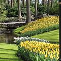 Yellow Spring by Charles Van Wagenen Jr