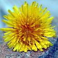 Yellow Spring by Linda Sannuti