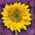Yellow Sunflower by Elisabeth Lucas