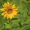 Yellow Sunflower On Green Background by Ofer Zilberstein
