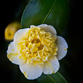 Yellow Tenderness by Alex Art and Photo