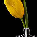 Yellow Tulip In Striped Vase by Garry Gay