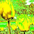 Yellow Tulips Abstract by Will Borden