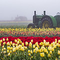 Yellow Tulips And Tractors by John Trax