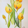 Yellow Tulips by J R Seymour