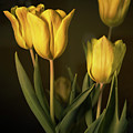 Yellow Tulips by Jacki Marino