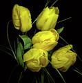 Yellow Tulips by Nataly Raikhel