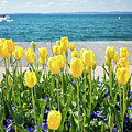 Yellow Tulips Near Lake by Natalia Macheda