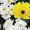 Yellow White Flowers by Elvira Ladocki