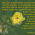 Yellow Wildflower - Romans by Linda Phelps