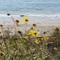 Yellow Wildflowers- Art By Linda Woods by Linda Woods