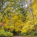 Yellow With Vertical Lines by Michael Cummiskey