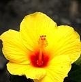 Yellow Wonder by David Lane