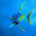 Yellowfin Tuna Three by Ken Figurski