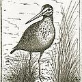 Yellowlegs Shorebird by Charles Harden