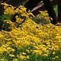 Yellows by Kathryn Meyer