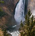 Yellowstone Grand Canyon Falls by Bob Phillips