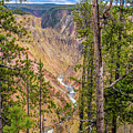 Yellowstone Grand Canyon  by Ronald and Nancy