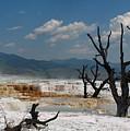 Yellowstone by Jana Goode