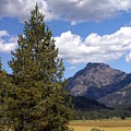 Yellowstone Landscape by Marty Koch