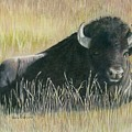 Yellowstone Loner by Vera Rodgers