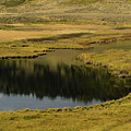 Yellowstone River Pond by Tracy Knauer