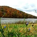 Yellowwood Lake, Southern Indiana by Scott D Van Osdol