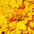 Yelow Tulip by Dragica  Micki Fortuna