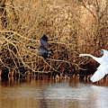 Yikes - Catching Up by Debbie Oppermann