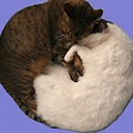 Yin And Yang by Valerie Ornstein
