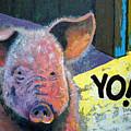Yo Pig by Suzanne McKee