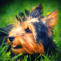 Yorki by Angela Doelling AD DESIGN Photo and PhotoArt