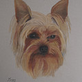 Pickles The Yorkie by Margaret Riley