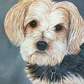 Yorkie Portrait by Karen Zuk Rosenblatt