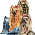 Yorkshire Terriers by Kathleen Sepulveda