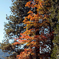 Yosemite Fall Color by Joanne Coyle