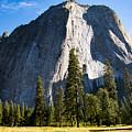 Yosemite Meadow 2 by Dan Norton