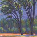 Yosemite Trees by Linda Ruiz-Lozito