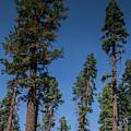 Yosemite Views #5 by Robert J Caputo