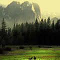 Yosemite Village Golden by Wingsdomain Art and Photography