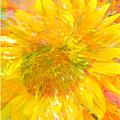 Sunflower Sunshine by Jill Love