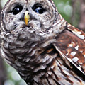 You Can Call Me Owl 2 by Lydia Holly