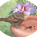 Young Blackbird After Raisins by Maureen Carter