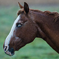 Young Blind Horse In The Rain by Mario Croteau