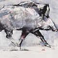 Young Boar by Mark Adlington
