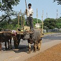 Young Buffalo Cart Driver by Chandrashekhar Sahukar