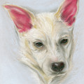 Young Carolina Dog Portrait 2 by MM Anderson