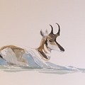 Young Pronghorn by Robert Fugate