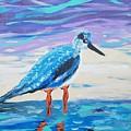 Young Seagull Coastal Abstract by Scott D Van Osdol